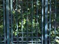 61-0760-B-Iron-Anvil-Gates-Man-Flat-TALL-OAKS-GATE-99