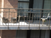 iron-anvil-railing-by-others-slc-downtown-2-1