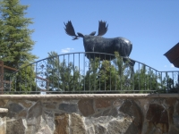 iron-anvil-railing-single-top-collars-yukon-rothman-10675-deer-crest-1